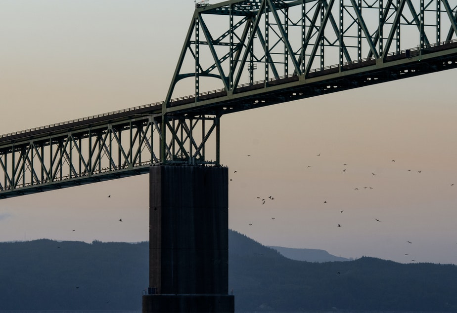 caption: Cormorants returned to the Astoria Bridge to roost at nightfall on June 3, 2019.