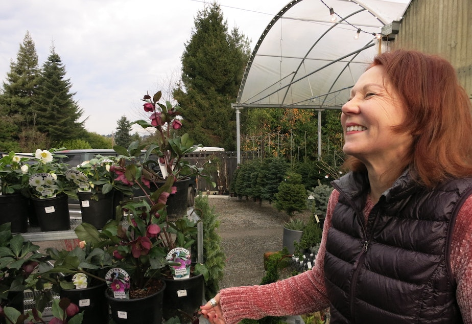 caption: Lyn Robinson owns Zenith Holland Gardens. She laughs at a landscaping joke made by KUOW listener, Nick Millward.